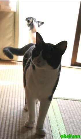 Tatami4