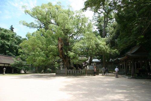 Oyamazumi2